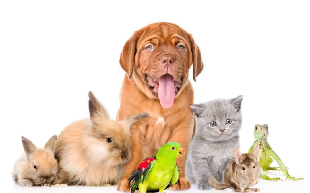Top 5 reasons to buy Pet Insurance